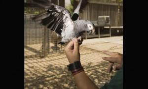 dresseur de perroquets